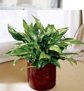 10 plantes d'intérieur faciles à entretenir... et ...