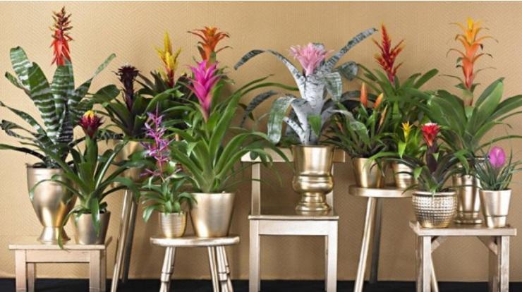 10 plantes d 39 int rieur faciles entretenir et for Plante bromelia