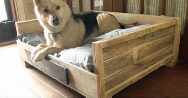 10 id es de lits pour votre chien fabriqu s partir de palettes de bois. Black Bedroom Furniture Sets. Home Design Ideas