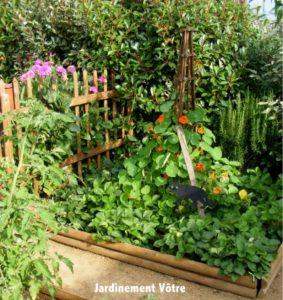 jardin potager quelles sont les fleurs qui les prot gent des insectes nuisibles. Black Bedroom Furniture Sets. Home Design Ideas