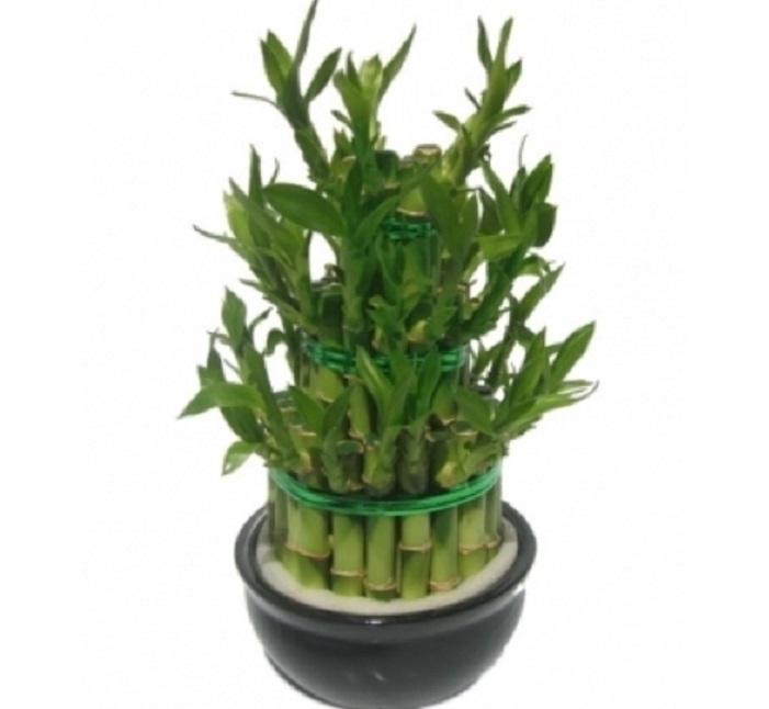 cette plante dans votre maison fonctionne comme un aimant pour la richesse et l nergie positive. Black Bedroom Furniture Sets. Home Design Ideas